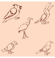Birds Pencil sketch by hand Vintage colors vector image
