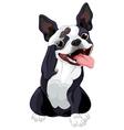 Boston Terrier Salute vector image