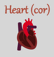 human organ icon in flat style heart vector image
