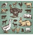 farm animals vintage set vector image