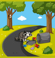 raccoon searching trash in park vector image