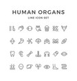 set line icons of human organs vector image