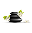 Stack of spa stones with cherry white flowers vector image