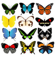 Colorful Butterflies Collection vector image