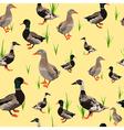 ducks seamless texture vector image