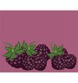 Blackberries delicious background vector image
