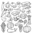 hand drawn vegetables icons set vector image