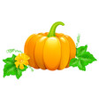 pumpkin with flower and leaves vector image