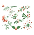 Red Berries Fir and Leaves vector image