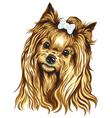 yorkshire terrier vector image vector image
