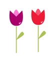 Beautiful two Tulips isolated on white vector image vector image