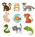 cartoon cute home pets collection vector image