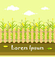 yellow cornfield with fence in flat style vector image