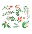 Red Berries Branches Fir and Leaves vector image