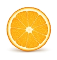 fresh ripe orange vector image