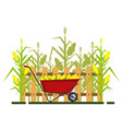 yellow corn in red wheelbarrow with fence vector image