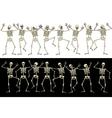 Fun skeletons vector image