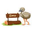 Cartoon zoo emu sign vector image vector image