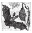 Brown bat vintage engraved vector image vector image