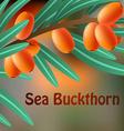 Orange juicy therapeutic sea-buckthorn on a branch vector image