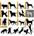 Dogs races vector image