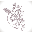 Anatomical heart with arrow vector image