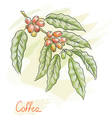 Twig of coffea vector image