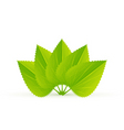 evergreen nature vector image