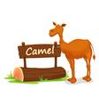Cartoon zoo camel sign vector image