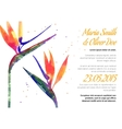 background with Strelitzia flower vector image