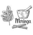 Moringa leaves and pod Mortar and pestle vector image