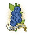 blueberries label vector image