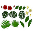 tropic flowers and palm leaves vector image