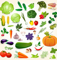 Collection of isolated ripe vegetables herbs and vector image