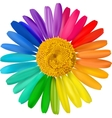 colorful daisy vector image