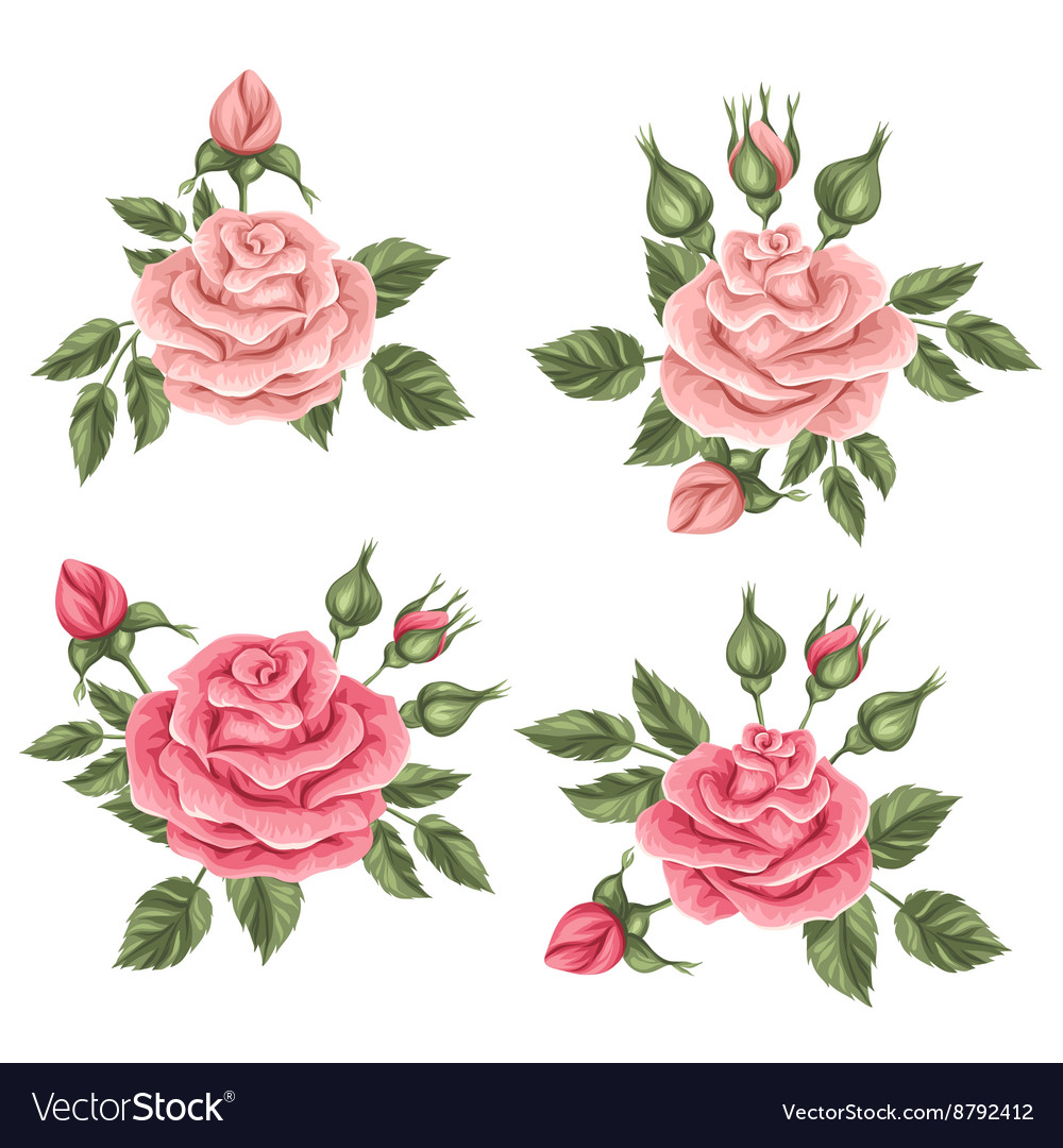 Floral elements with vintage roses decorative vector