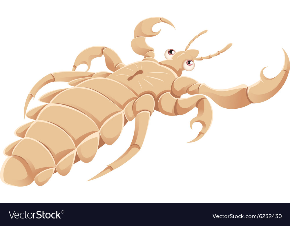 Cartoon louse vector