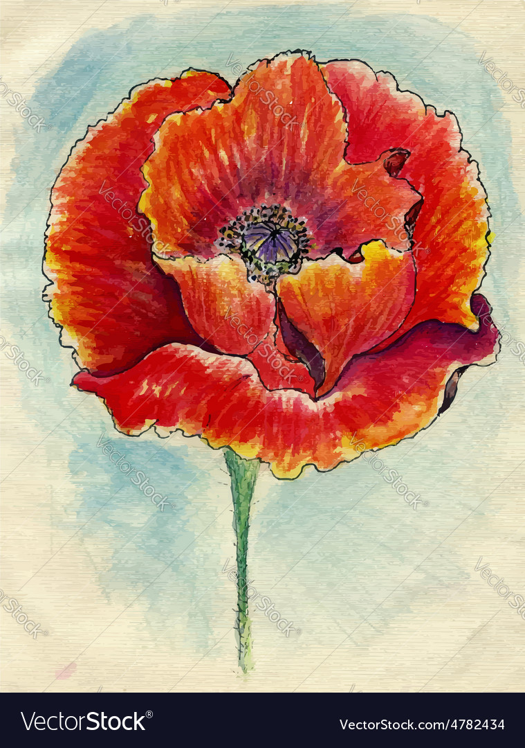 Poppy flowers sketch03 vector