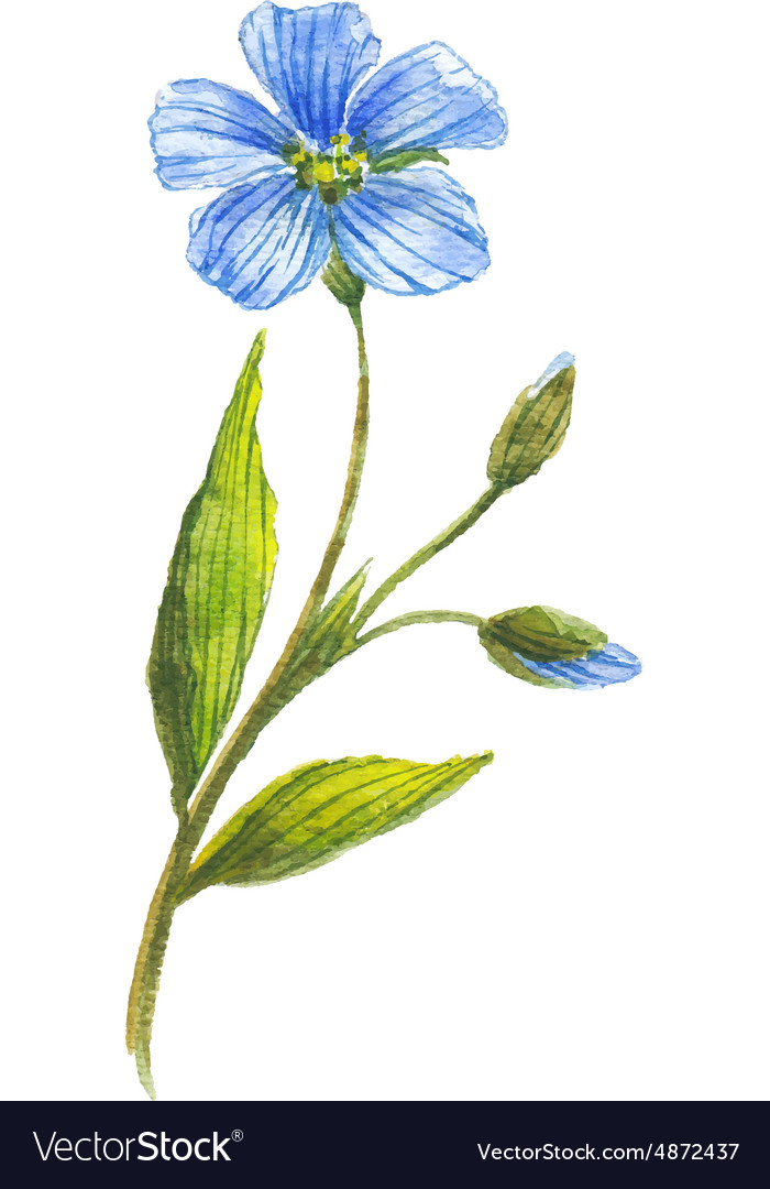 Blue flower of flax vector