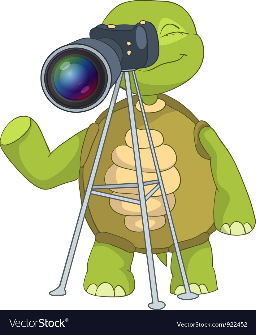Funny turtle photographer vector