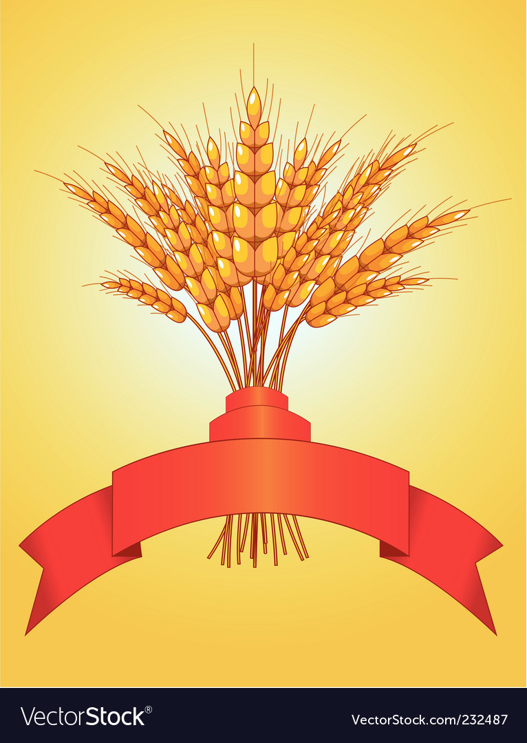 Ears of wheat vector