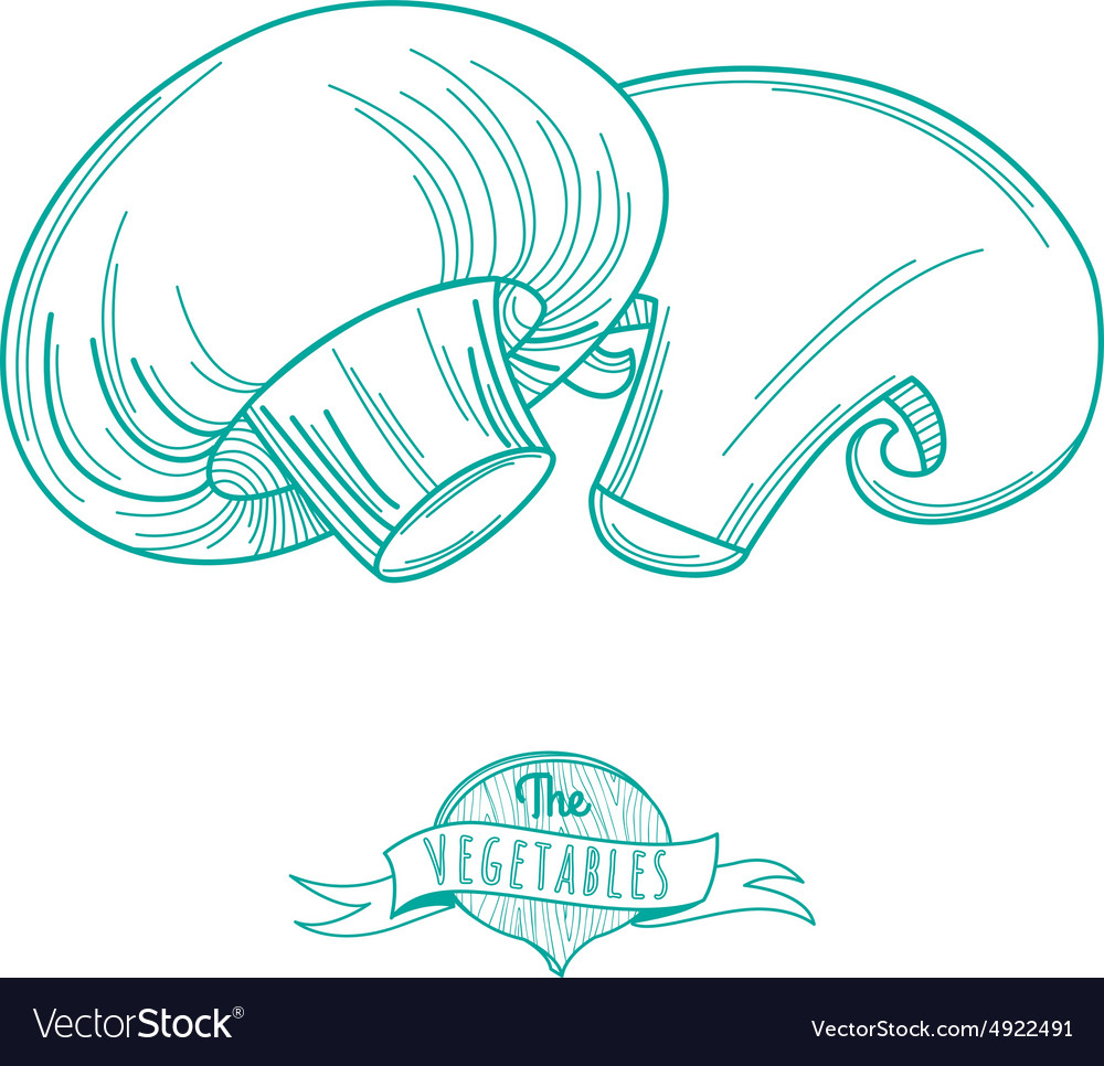 Outline hand drawn sketch of mushrooms flat style vector