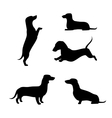 Dachshund silhouettes vector image