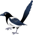 magpie vector image vector image