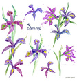 spring flowers collection watercolor purple iris vector image vector image