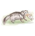 raccoon dog vector image vector image