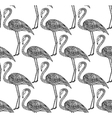 Seamless pattern with hand drawn flamingo birds in vector image