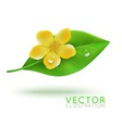 green leaf with flower vector image