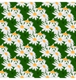 Seamless pattern with bouquets of daisies vector image