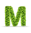 Letter M alphabet of green leaves vector image